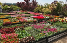 Flower Planting Pittsburgh