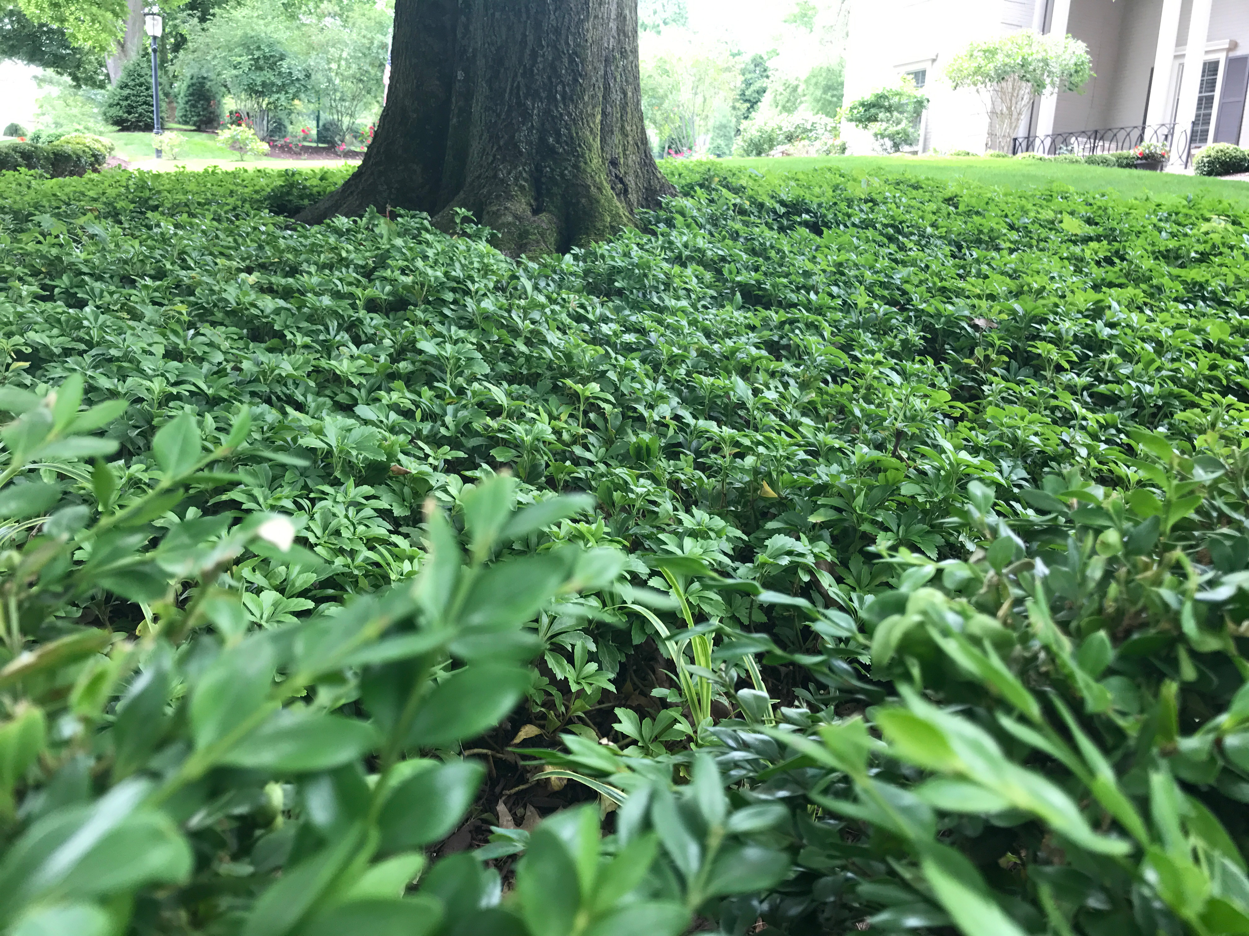Weed Control Pittsburgh