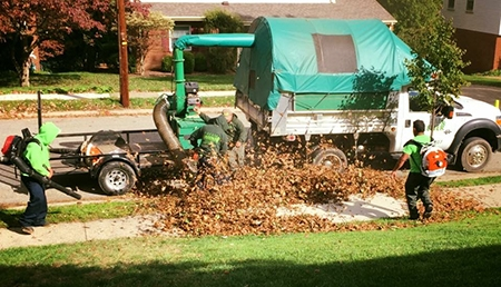Leaf Removal Mt Lebanon