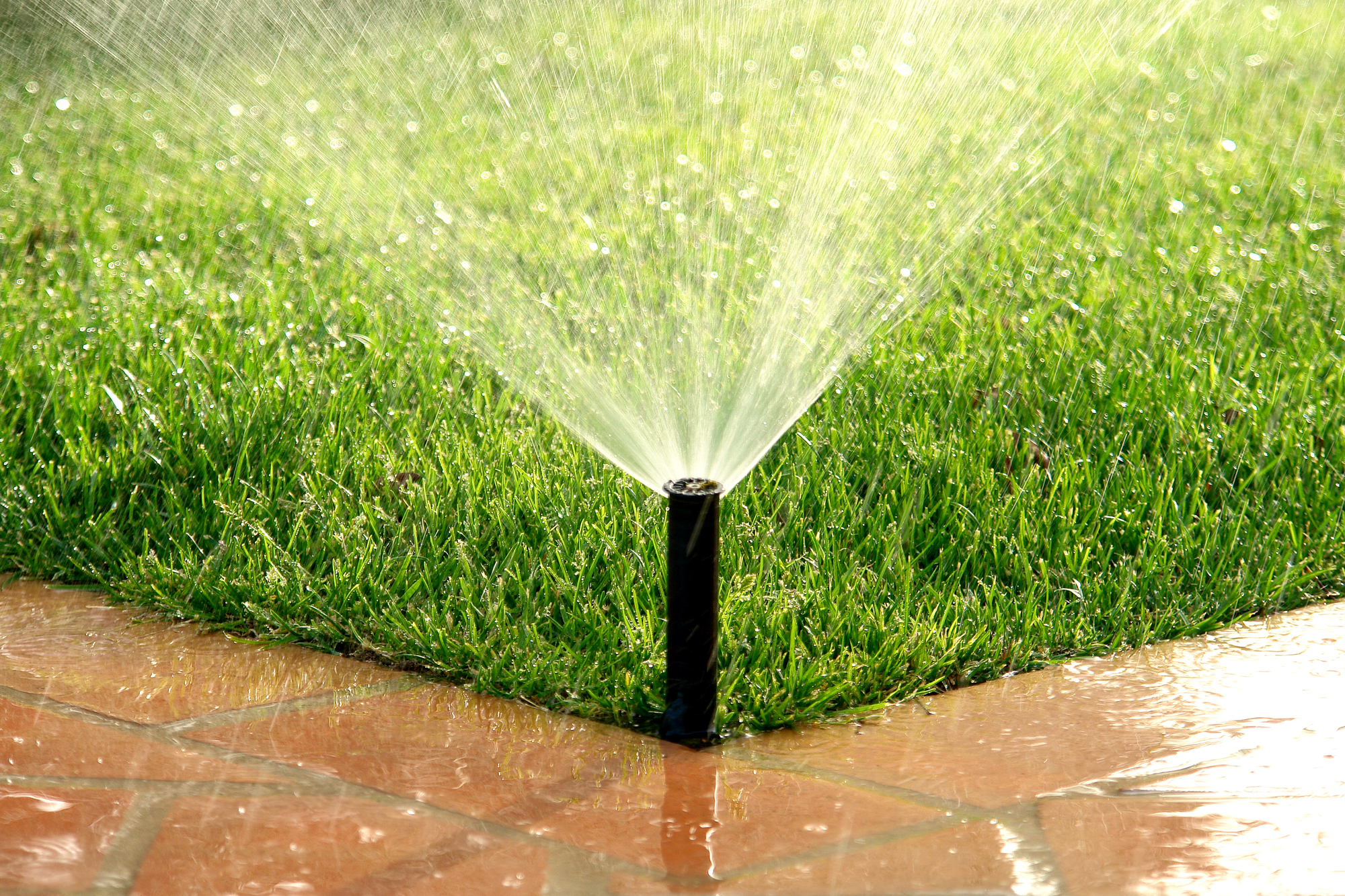 Proper Lawn Watering Practices